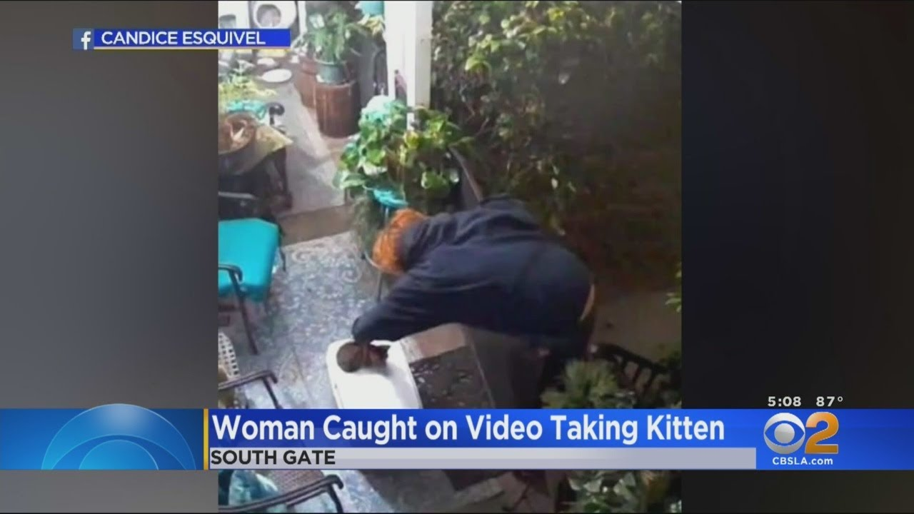 Caught On Video Woman Wanted In South Gate Killing Of Kitten Youtube