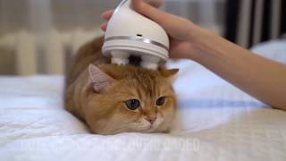 Best funny cat videos 2019 (Cuteness Overloaded)  - FUNNY CAT COMPILATION