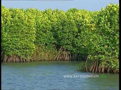 Kumarakom Responsible Tourism initiatives