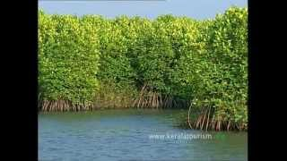 Responsible Tourism initiatives, Kumarakom