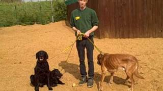 Dogs Trust West London: Rescue Dogs Love You More!