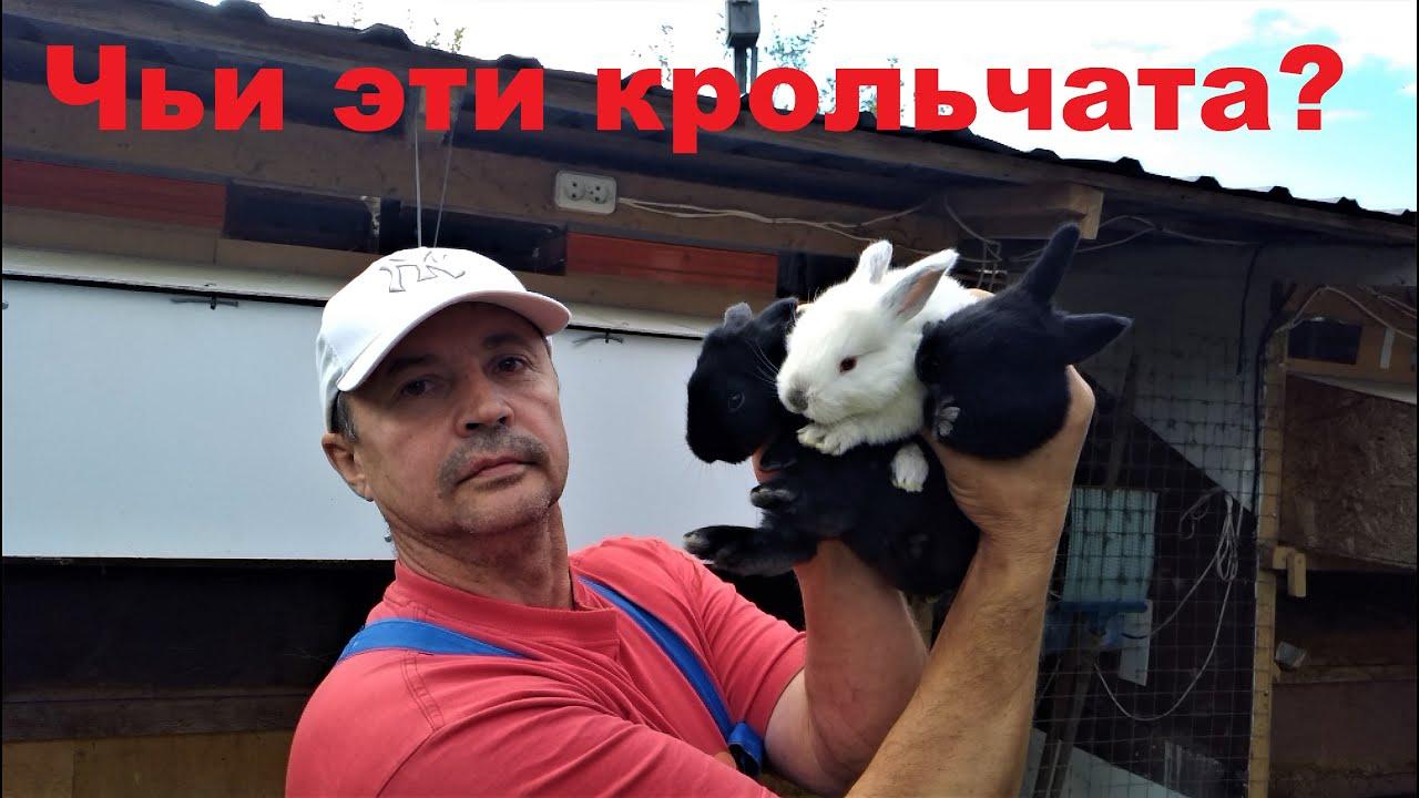 НЕ ПЛЕМЕННЫЕ КРОЛЬЧАТА  15 ДНЕЙ ВЫЗЫВАЮТ СОМНЕНИЕ Кролики содержание и разведение