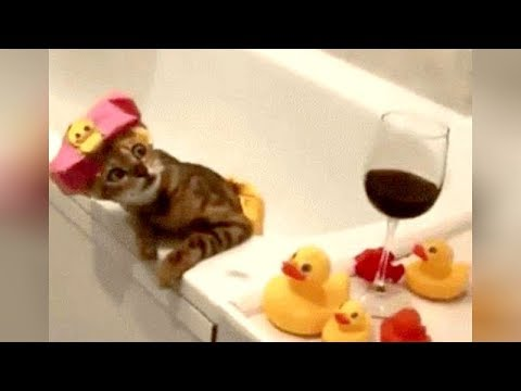 Number 1 CAT COMPILATION! - So FUNNY you'll SCREAM WITH LAUGHTER!