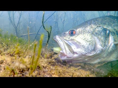 Underwater Sight Fishing - Which Lures Work Best?