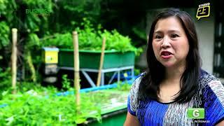 MADE Aquaponics Philippines Part 1 of 2