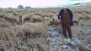 Karaşar Köyü--İBRAHİM SARI-- ULAŞ