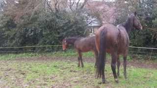 Petit cheval à bascule 014