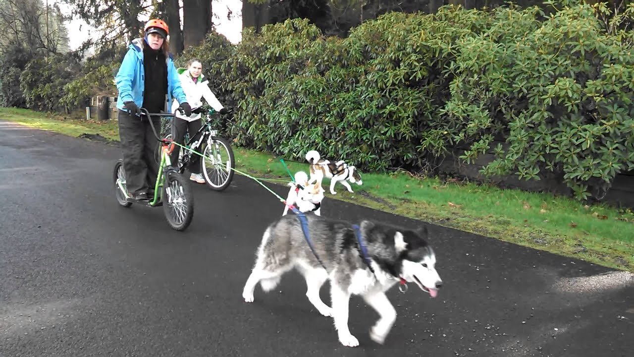 Bikejoring on Vimeo