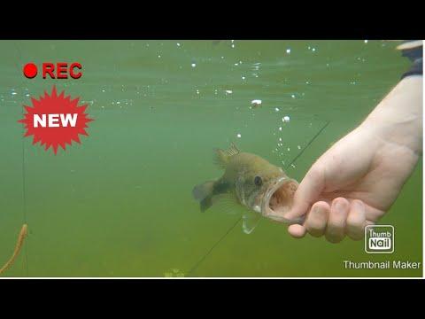 Lake Cachuma Bass Fishing (UNDERWATER FOOTAGE!!!)