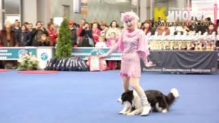 """ordinary Magic"" Dog Dancing"