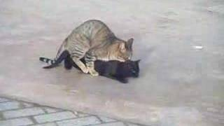 PORNO cats ! ! ! XXX DDD