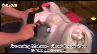 Grooming Maltese part 1  Show Preparation