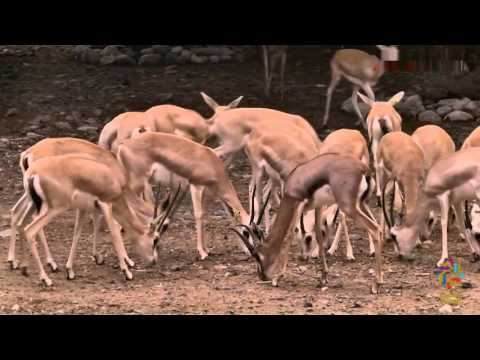 Arabia's Wildlife Center -  Sharjah   HD