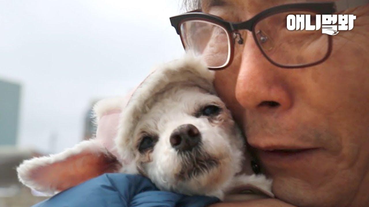 당신의 반려견을 더 사랑하는 방법ㅣHow To Love Your Dog Even More