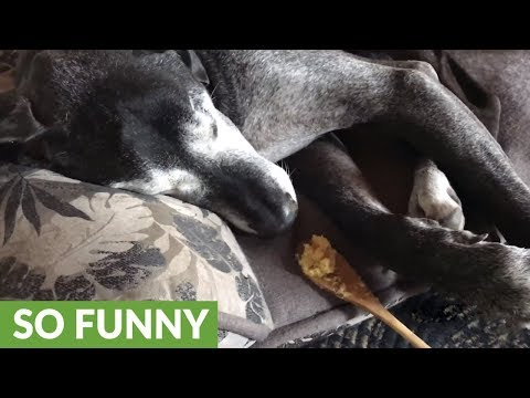 Blind dog wakes from slumber when treats appear at her nose