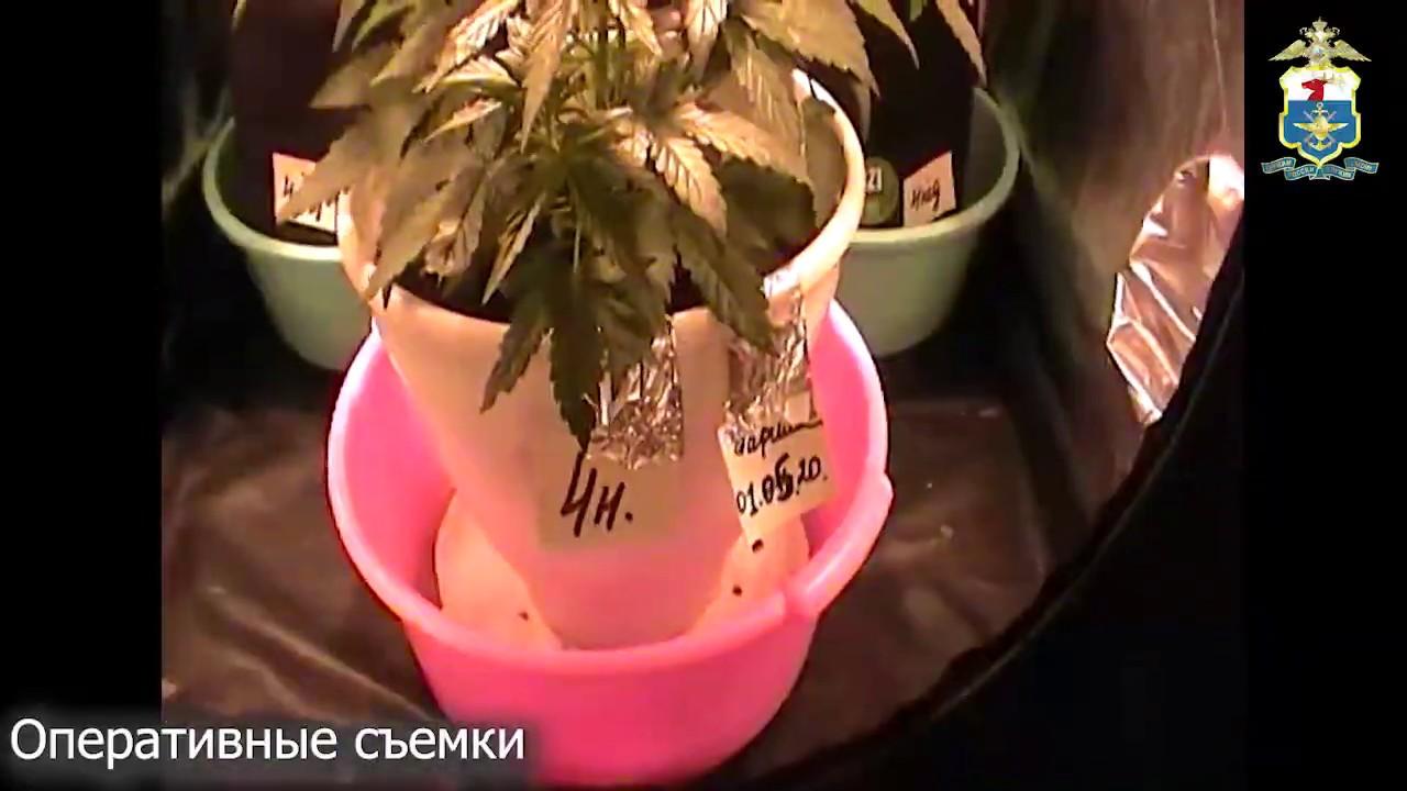 Житель Ершова устроил у себя дома нарколабораторию