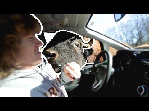 Safari Animals In My Car!