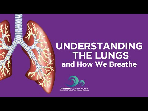 Understanding the Lungs and How We Breathe