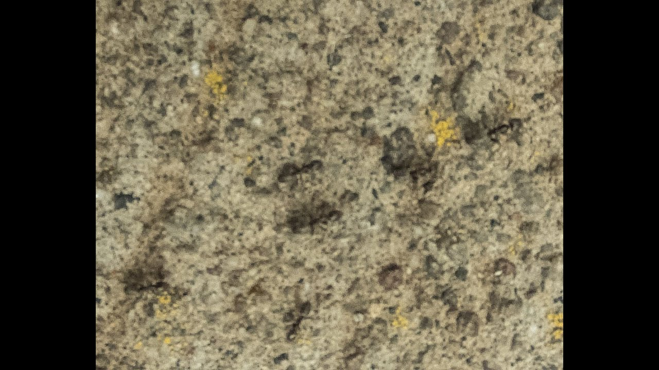Small Red Ants In Kitchen Little Black Ants Youtube