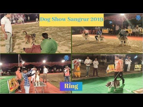 Dog Show Sangrur 2019(Ring)