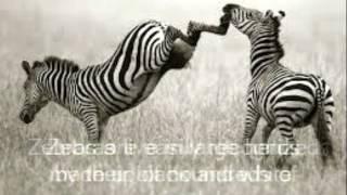 Zebra Photo Story 1 ADDie