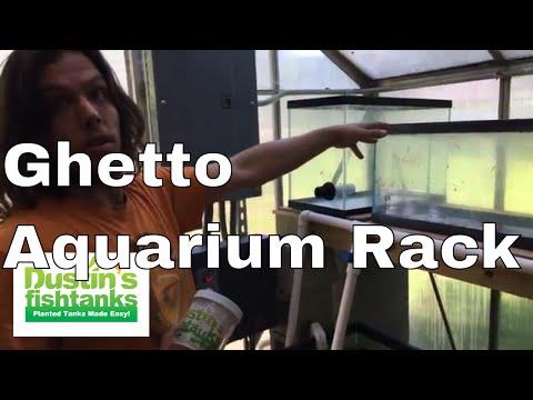 Ghetto Aquarium rack - Josh does it best.