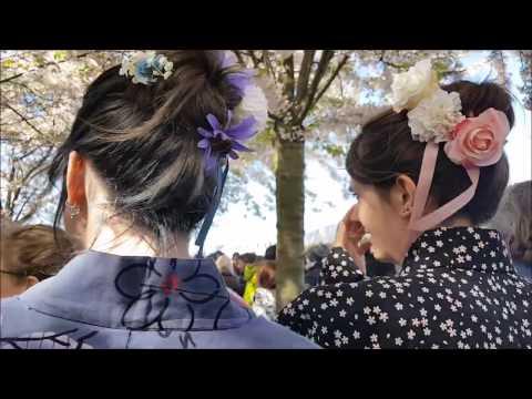 SAKURA FESTIVAL COPENHAGEN 2017  ||  Walking around in a traditional japanese Yukata