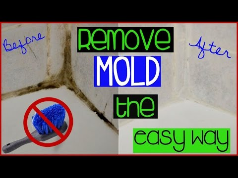 HOW TO CLEAN GROUT THE EASY WAY || Shirlee Alicia