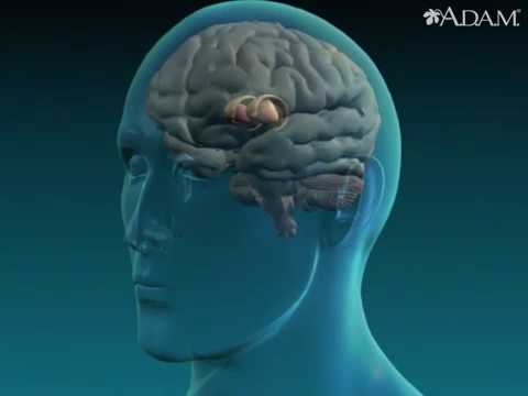 what is the cause of athetosis animation basal ganglia injury