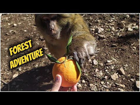 epic-forest-adventure-feeding-savage-monkeys-oranges