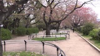 Сакура в Японии — цветение сакуры и странные металлические ограждения в Токио(, 2015-04-16T14:08:23.000Z)