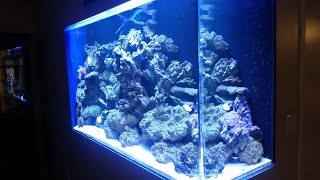 "My Aquarium Story - 300 Gallon ""floating"" In-wall Tank By Philip Elie"