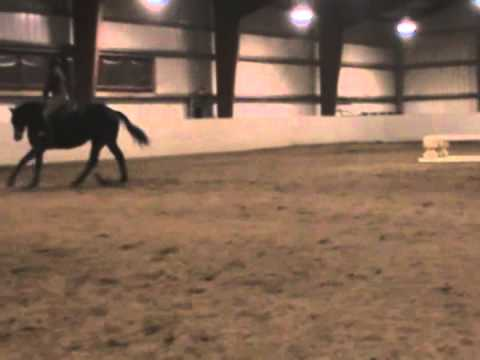 TT Tight- Athletic Thoroughbred Jumper Mare FOR SALE