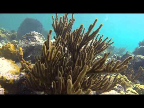 Snorkeling in Virgin Islands National Park