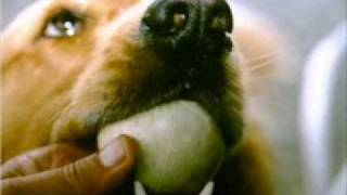 Dog Training-easy And Proven Tips For Housebreaking A Puppy