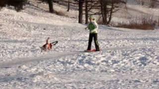 Бигль - ездовая собака