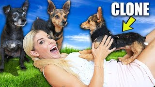Making our Dogs Jealous with their Clones for 24 Hours!  PawZam Dog