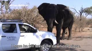 Elephant in campsite