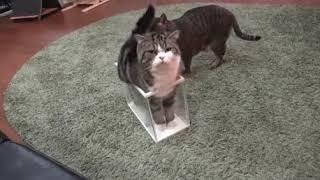 Очередное доказательство того, что коты - это жидкость:)