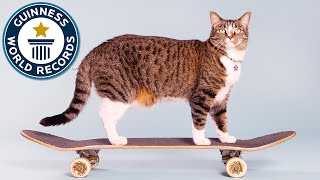 Most tricks by a cat in one minute  Meet the Record Breakers