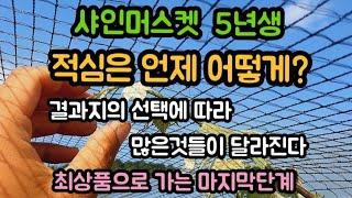 #샤인머스켓재배방법 #시설하우스비가림비닐하우스 #결과지…
