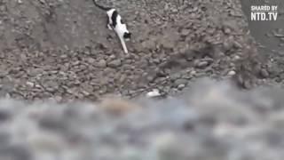 Кошка вытащила щенка из ямы!