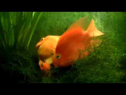 Mutottal Anak - Juz Amma - Back Video Pemandangan Laut_02