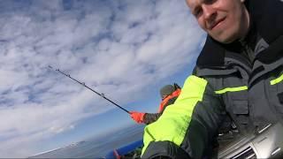 Тресковая рыбалка! 6 мая 2019 г Кильдин восточный, м Малый Олений