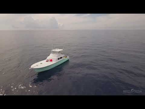 "St Augustine Offshore Fishing ""African pompano"""