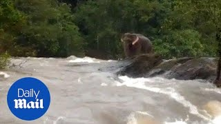Elephant finds itself stranded in overflowing river in Kerala