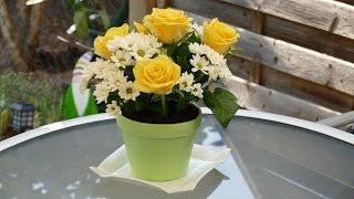 Torte mit echten Blumen | Blumentopf-Torte | von Nicoles Zuckerwerk