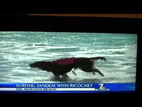 NBC segment of Surf dog Ricochet surfing with Gina & Randy on New Year's eve