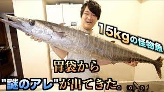 """15kgの巨大怪物魚をさばいたら胃袋から""""謎のアレ""""が出現した件。。。"""