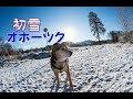 初雪 オホーツク犬の散歩「田舎暮らし ブログ動画」